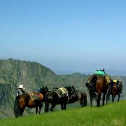 Horse riding in the French Pyrenees
