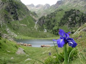 Beautiful summer in the Pyrenees mountains