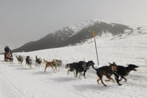 Sledding with huskies in the Pyrenees
