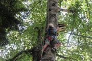 Climbing up a tree