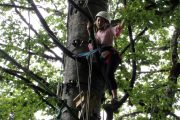 Tree climbing in the Pyrenees