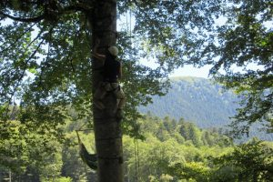 Enjoy tree climbing on an adventure holiday in France