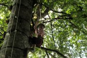 Having fun Pyrenees tree climbing