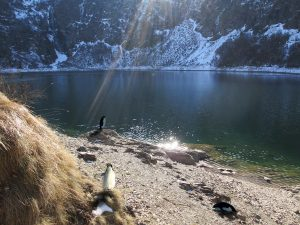 Penguins in the Pyrenees