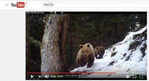 Video footage brown bears in Pyrenees