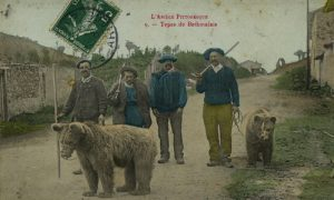 Captured brown bears in Pyrenees early 20th C