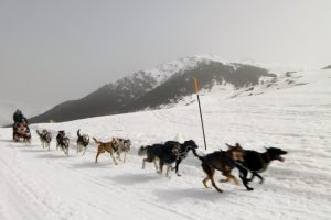 Husky sledding in the Pyrenees