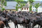 Merens horses resting on Couserans transhumance trek