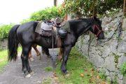 Merens horse resting on Transhumance