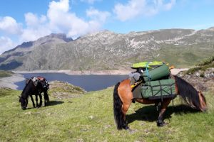Horses laden for Pyrenees horse trekking holiday
