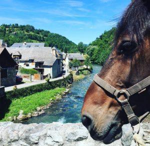 Castillonais native horse breed in the Pyrenees