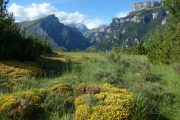 Wildflower beauty of Anisclo gorge Aragon
