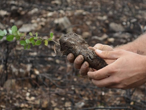 Planting tree saplings to carbon offset