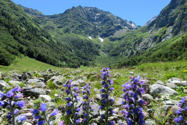 Flowers in the Pyrenees mountains