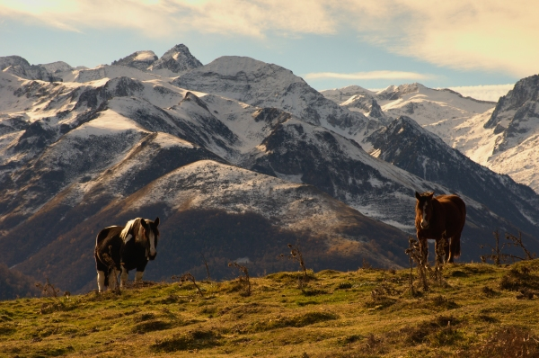 Horses in the Pyrenees mountains