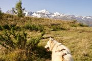 Hiking with huskies in the Pyrenees