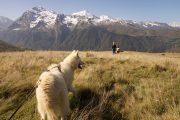 Mountain views hiking with huskies
