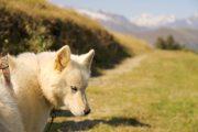 Beautiful husky face