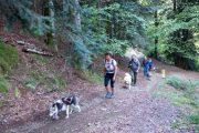 Walking uphill with huskies