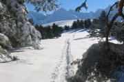 following snowshoeing tracks