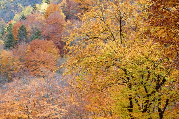 Autumn tree colours in the Pyrenees