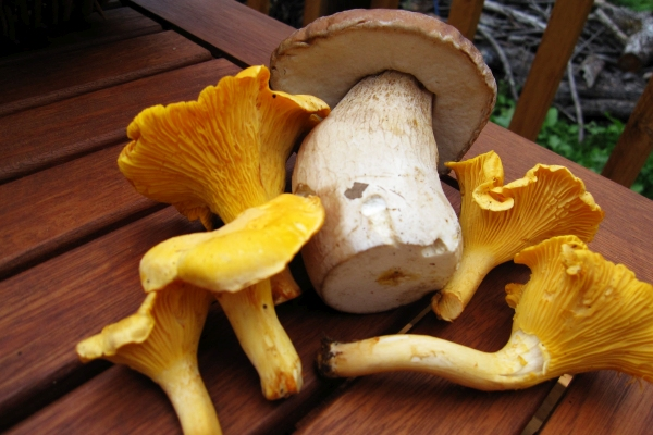 Foraging for mushrooms in the Pyrenees